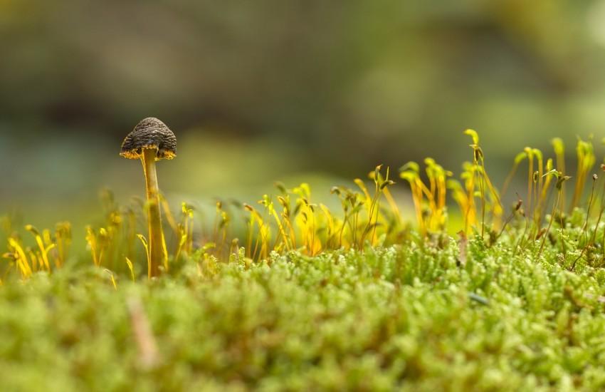 mushroom-2228384_1280